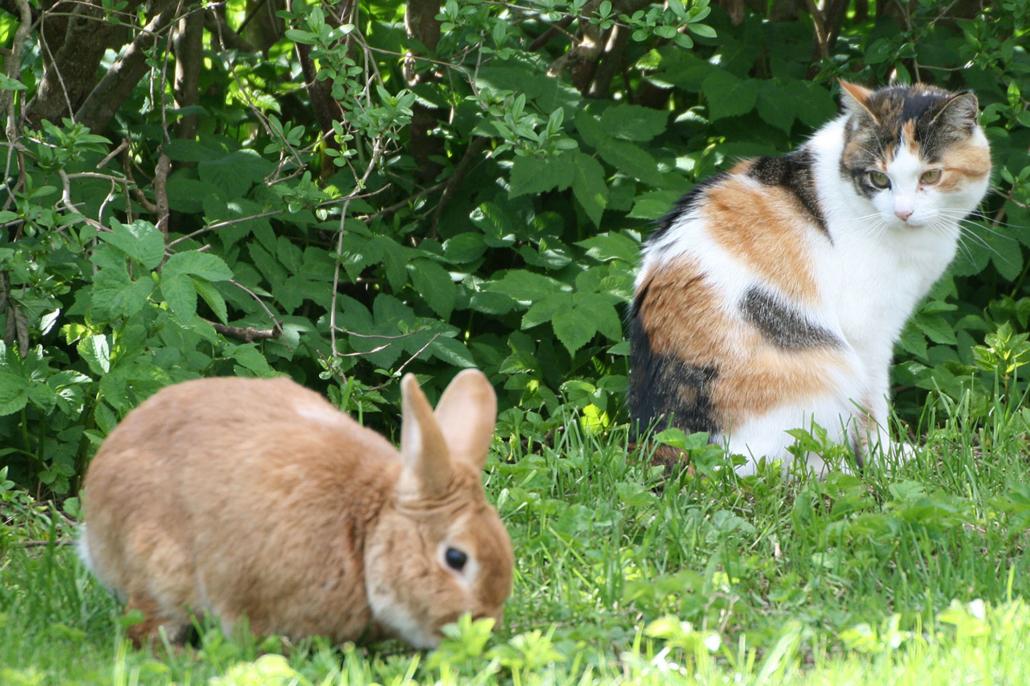 Tiere auf unserem Hof